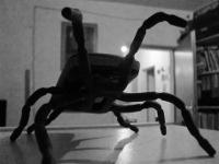 2013-spider-spider